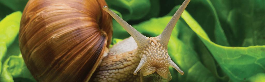 Molluscicides